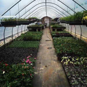 Gardener, North Conway